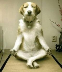 dog-meditating